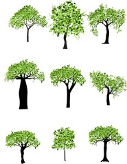 Set of vector trees with foliage
