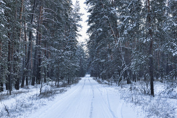Forest road through the winter woods