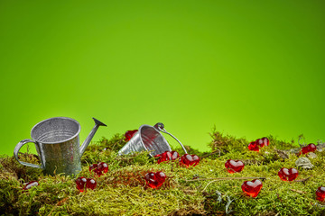 Green background of forest moss with tin bucket, can and red spilled hearts
