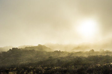 Sea fog rolling in over the Namaqua National Park at sunrise