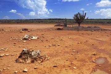 Desert landscape on the Hato Plain, Curaçao, Netherlands Antill