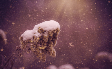 Dreamy photo of a winter's plant