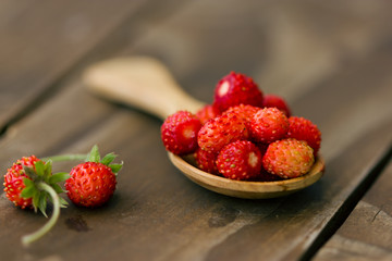 berries of wild strawberry in a wooden spoon