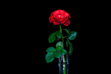 Amazing red rose in crystal glass  Floral wallpaper