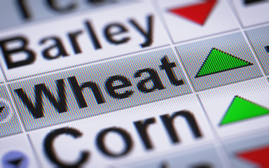 Index of Wheat. Up.