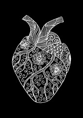 Hand drawn human heart. Doodle style.