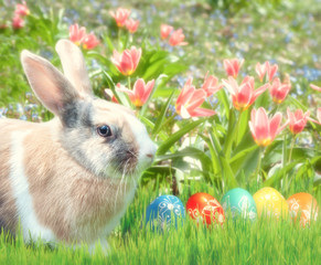 Cute rabbit in the grass with tulips