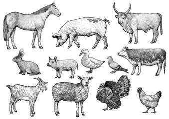 Farm animals illustration, engraving set, vector