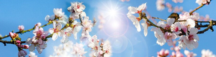 Romantische Grußkarte: Kirschblüten vor blauem Frühlingshimmel :)