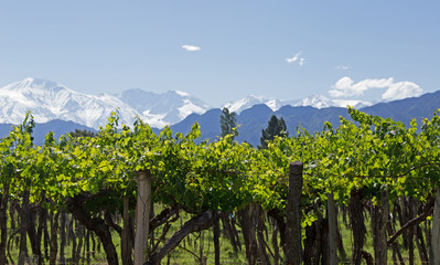 Andes and Mendoza Vineyard.