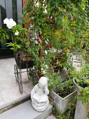 White orchid on Vintage cart in garden