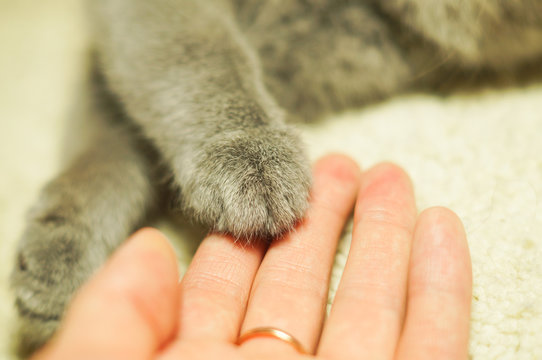 cat's paw in a womans palm
