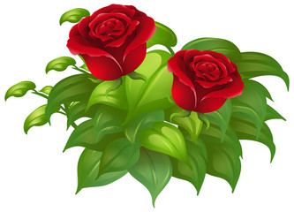 Two red roses and green leaves