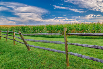 Mature Corn Field With Wooden Fence and Great Sky