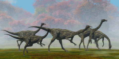 Gallimimus Dinosaur Fall Day - A flock of Gallimimus dinosaur reptiles forage for food in the Cretaceous Period of Mongolia.