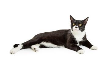 Black and White Tuxedo Cat Lying Down