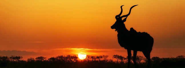 Poster Afrique South Africa Sunset Kudu Silhouette