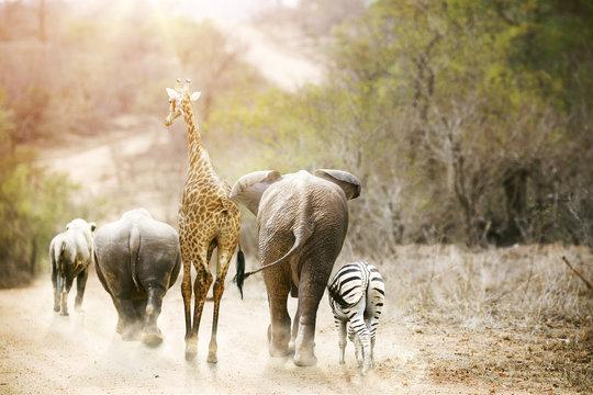 Africa Safari Animals Walking Down Path