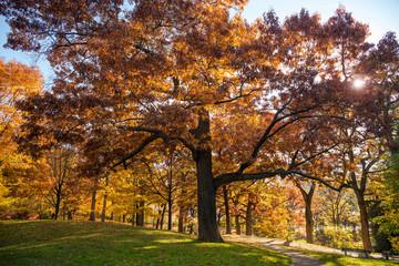 Colorful Autumn in Park, Toronto, Ontario, Canada
