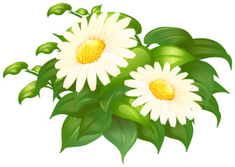 White daisy flowers in green bush