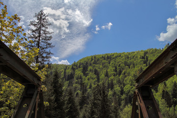 The bridge, sky and forest