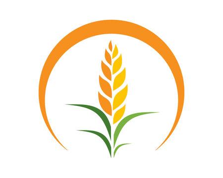 wheat harvest icon