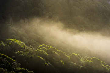 Sea mist drifting in over coastal forest