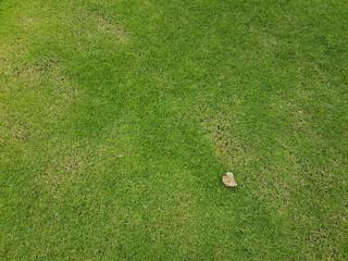 Fresh green grass field texture background
