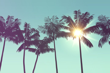 Tropical palm tree silhouette against bright sunlight