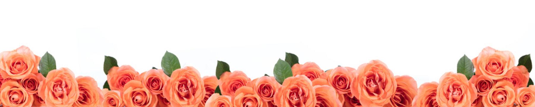 panorama mit rosen