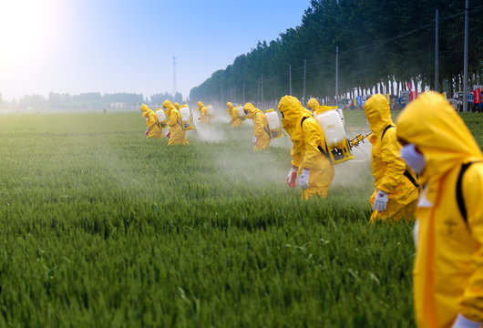 farmers sprying pesticide in wheat field wearing protective clothing