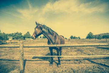 Horse on farm, countryside landscape