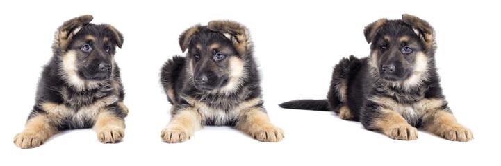 Puppy looking