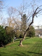 Baum im Stadtpark