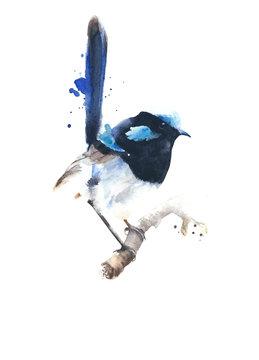 Bird watercolor blue wren Australian bird wildlife animal  illustration isolated on white background greeting card