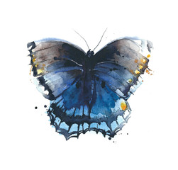 Butterfly blue color insect watercolor painting illustration isolated on white background
