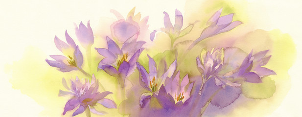 colchicum watercolor background