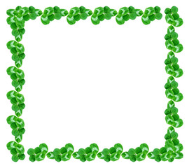green clover leaves isolated on white background. St.Patrick 's