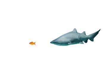 Composite image of side view of fish swimming