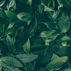 Creative layout made of green leaves. Flat lay. Nature backgroun
