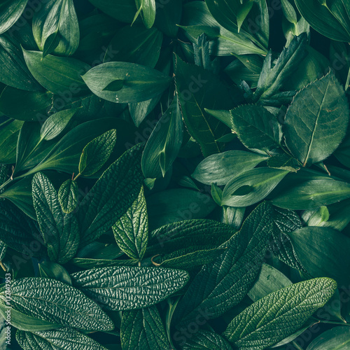 creative layout made of green leaves flat lay nature. Black Bedroom Furniture Sets. Home Design Ideas