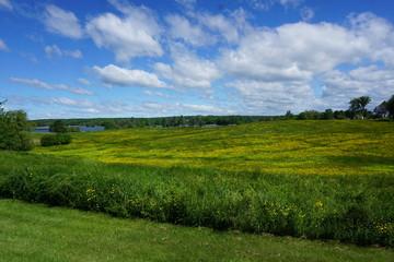 Coastal Maine Summer Field