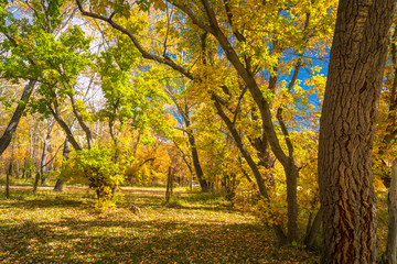 Trees and Fall foliage in Dinosaur National Monument, Utah