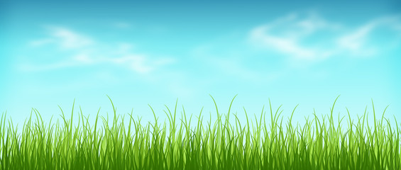 Wonderful warm spring day. Grass and sky with clouds. Panorama.