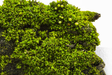 Green moss - texture and background