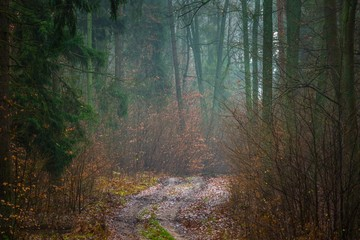 Wall Murals Forest Fall forest with beautiful colors and sandy road