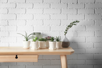 Succulents on wooden table on white brick wall background