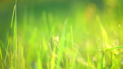 Fotoväggar - Grass. Blurred Grass Background is closeup. Nature. Environment concept. HD video footage 1920x1080