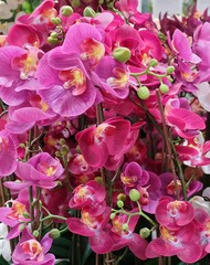 Pink Artificial Streaked Orchid Flowers or Phalaenopsis