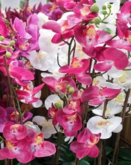 Beautiful Artificial Streaked Orchid Flowers or Phalaenopsis